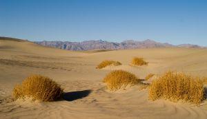 W pustyni i w puszczy – streszczenie książki