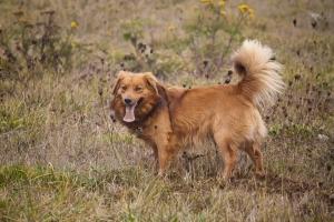 pies, który jeździł koleją streszczenie
