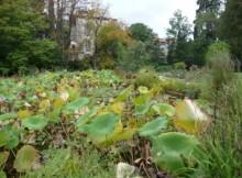 streszczenie tajemniczy ogród
