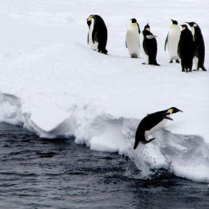 Zaczarowana zagroda – opowieści z zimnej Antarktydy