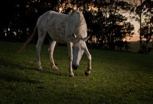 Streszczenie książki Biały Mustang