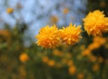 opracowanie lektury kwiaty polskie