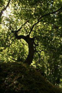 Ballady Goethego – opracowanie wybranych utworów
