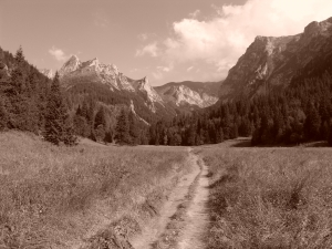 Wybrane wiersze Adama Asnyka – opracowanie lektury