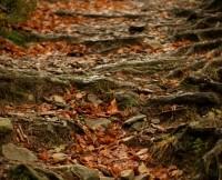 opracowanie wierszy bruno jasieńskiego