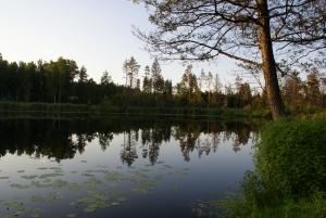 Poezja Anny Świrszczyńskiej – interpretacja wybranych wierszy